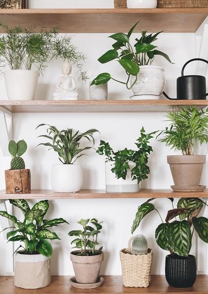 Tips e conselhos para plantas de casa