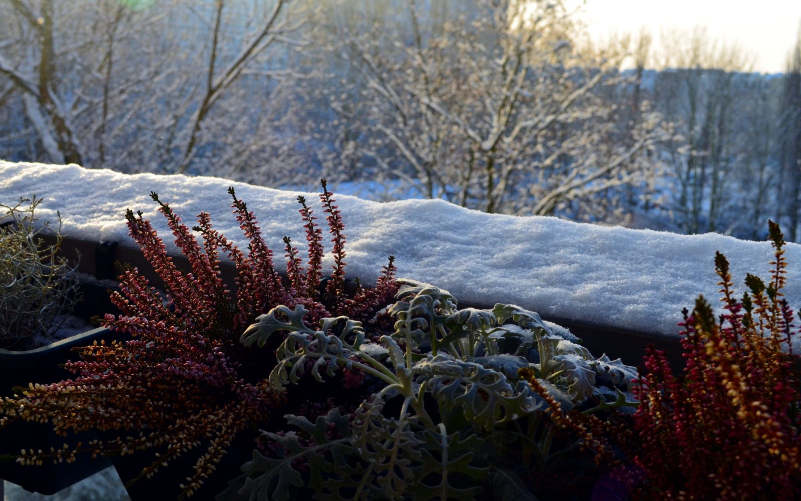 Flores e plantas de inverno