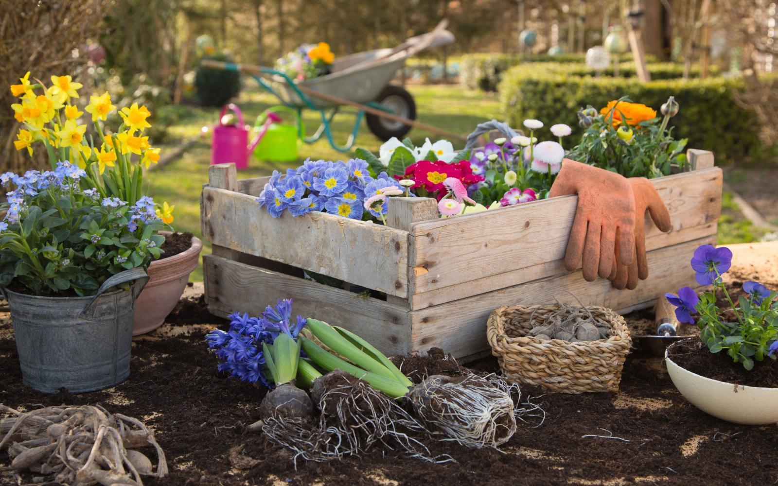 Plantas na primavera: cuidados básicos