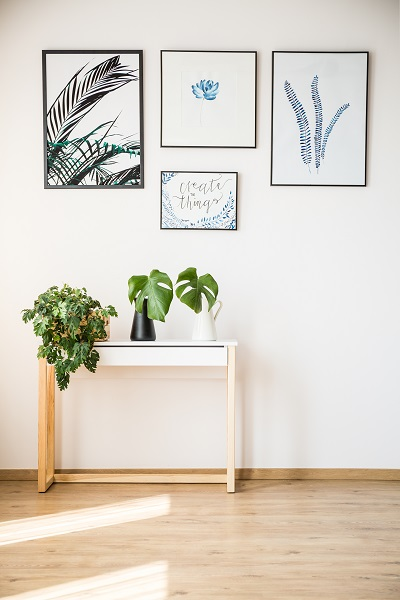 plantas de interior perfeitas