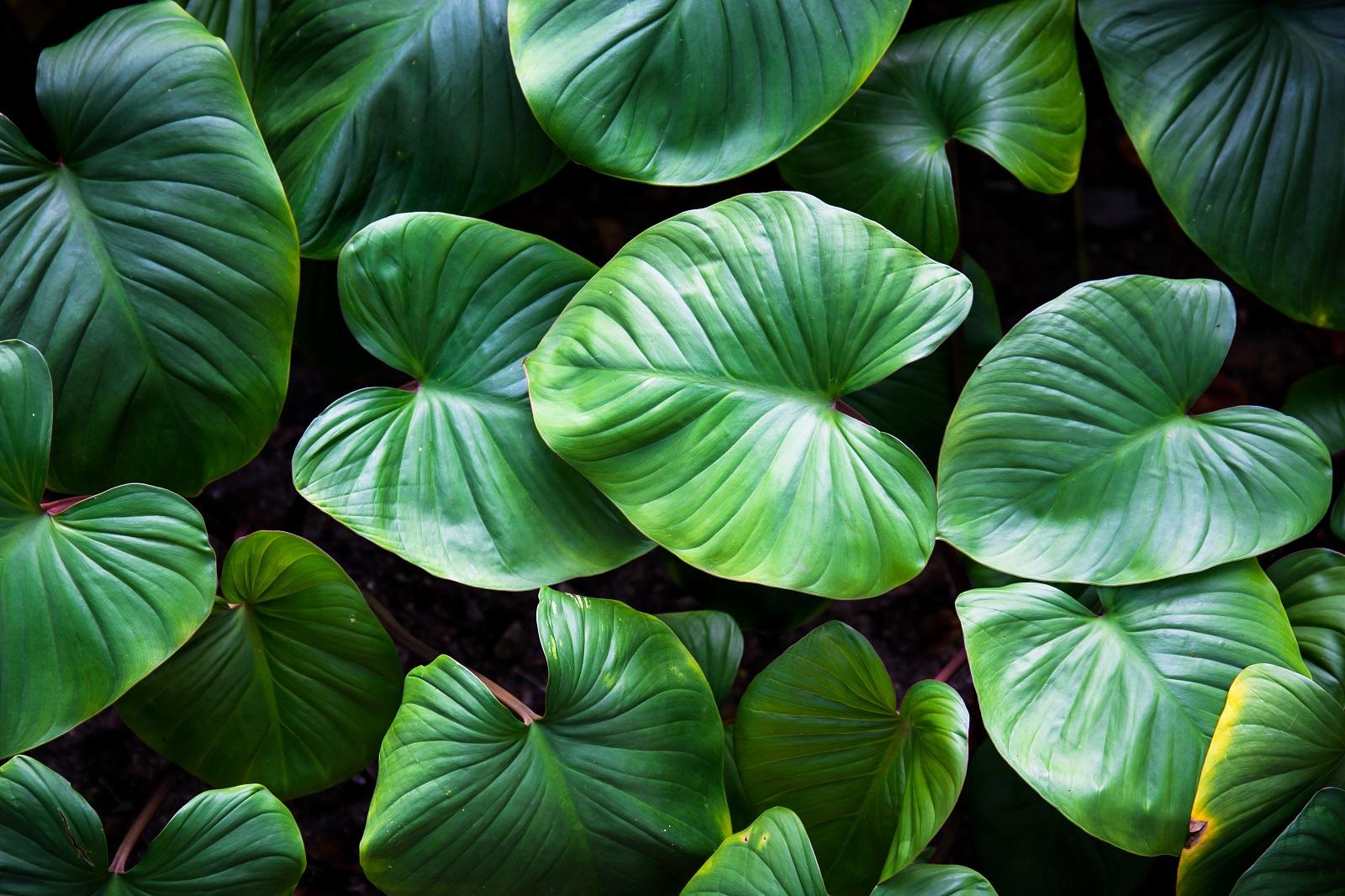 Cuidados paras plantas de interior perfeitas